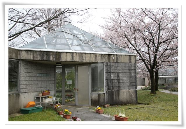 農林総合研究センター-5 ふれあい温室-1 16.4.10