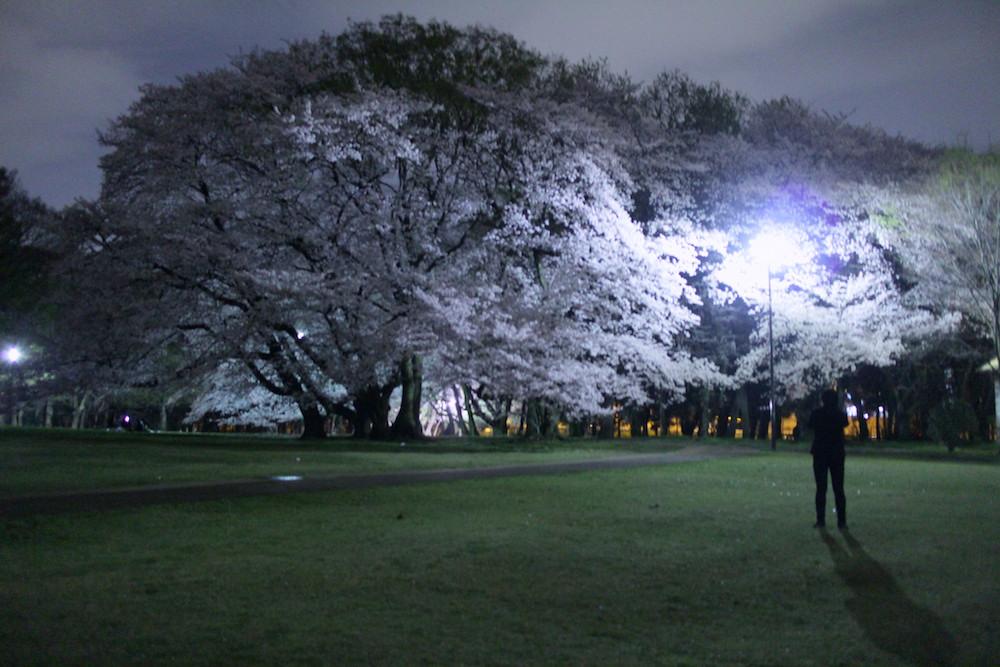 夜桜6.JPG