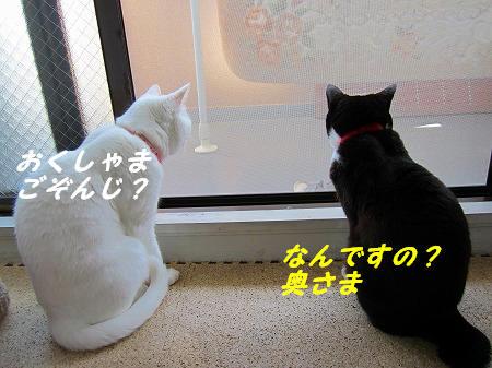 おくしゃま、ごぞんじ?.jpg