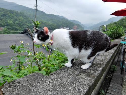 侯? 台北 台湾 猫村
