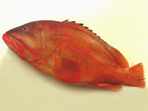 アカハタ 魚 寿司.jpg