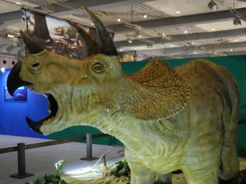 メガ恐竜展2017巨大化の謎にせまる2 トリケラトプスの生体復元模型
