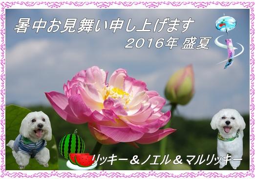 2016暑中お見舞いリッキー&ノエル
