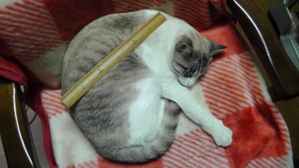 猫と竹物差し 竹尺 30cm
