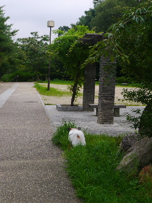2012京都夏3−3.JPG