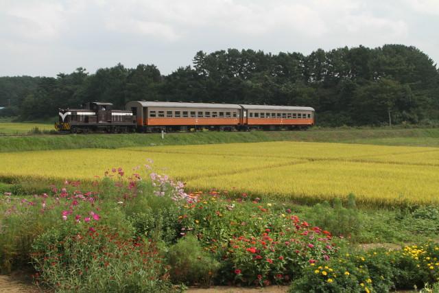 津軽鉄道  実りの秋と 旧型客車3