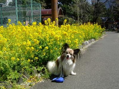 2012お花教室3月6.JPG