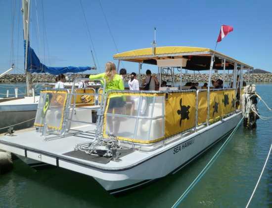 ハワイ 野生のイルカと泳ぐオプショナルツアー