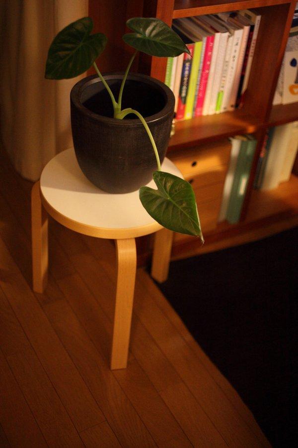 植物を置くのにもいいね。.jpg