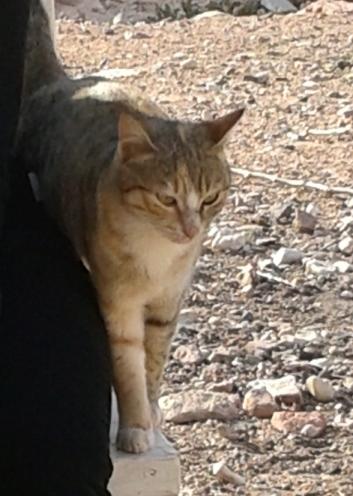 Feynan 猫