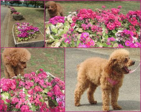 お花見20131.jpg