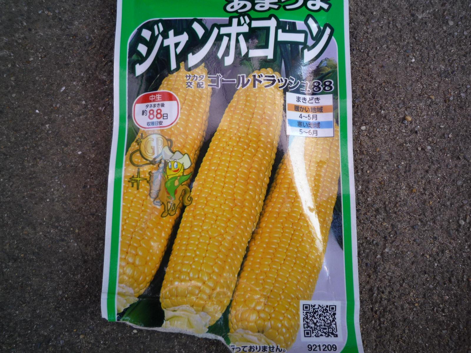 トウモロコシ種.JPG