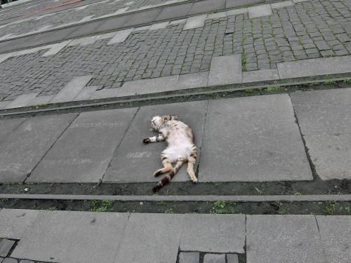 ホウトン 猫村 新北市  猫村 猴? 世界6大猫スポット