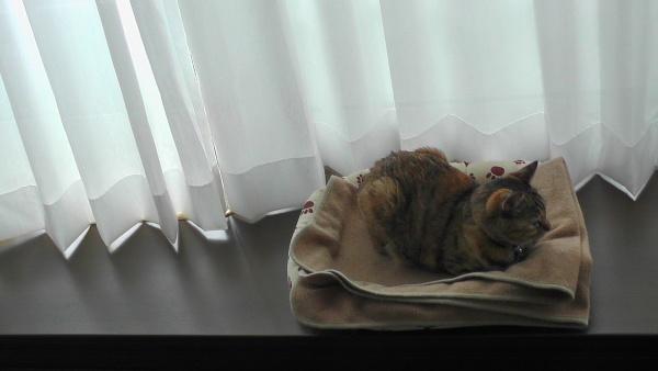 出窓のカウンタに置いたベッドの上で寝るネコ