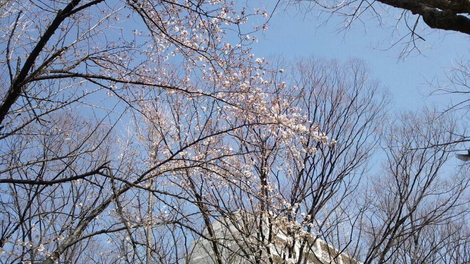 0328 新金岡公演桜