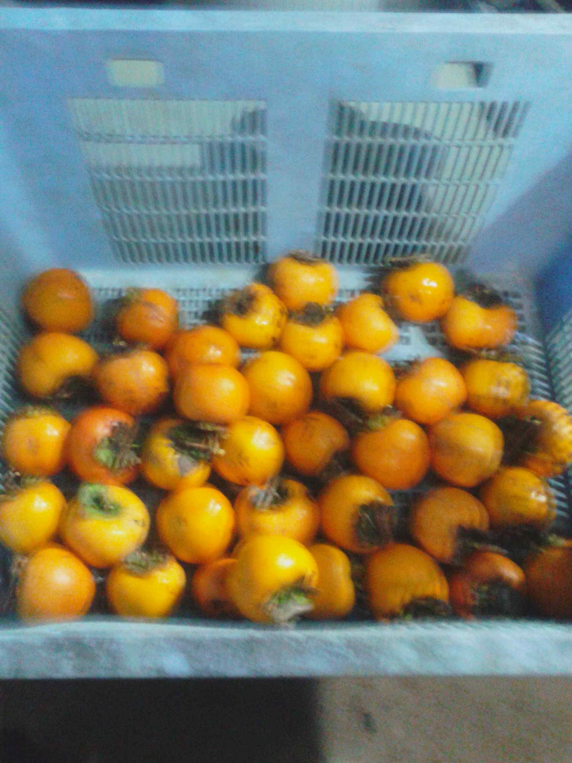 2017/11/5(日)の渋柿の穫