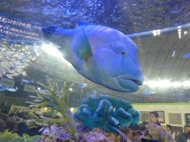 7 水族館