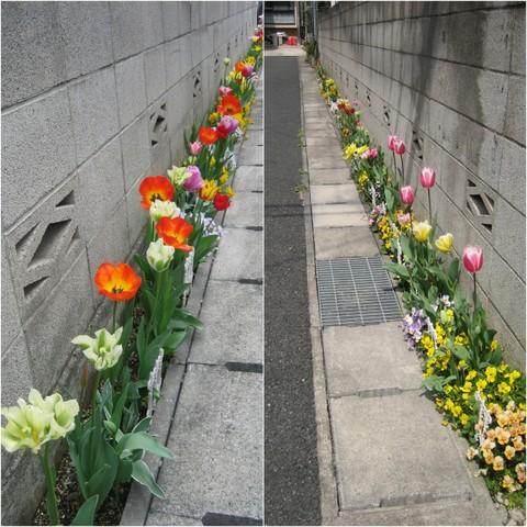 ガーデニング2007春.jpg