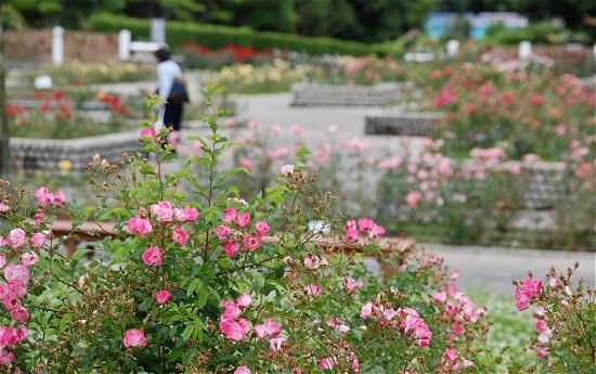 大阪写真教室フォトピア 撮影実習 植物園