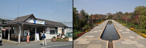 shibazakura2013_a.jpg