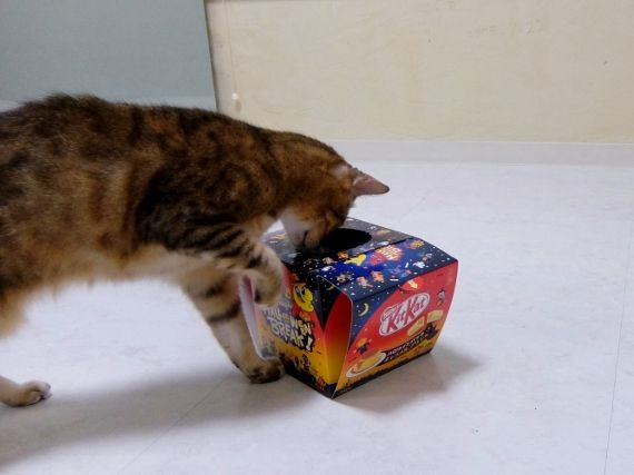 ネコ コストコ レポ ブログ キットカット ハロウィーン 868円 ネスレ キットカット ハロウィンボックス キャラメルプリン味