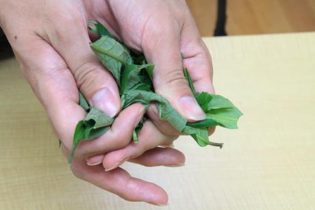 葉の揉み込み.1