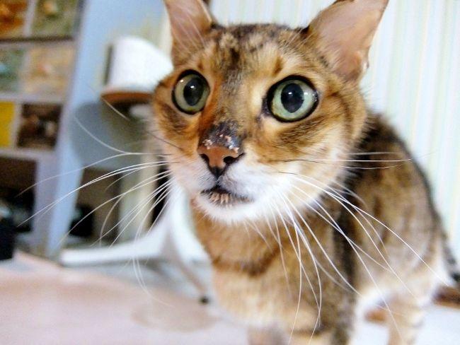 猫 消化器型リンパ腫