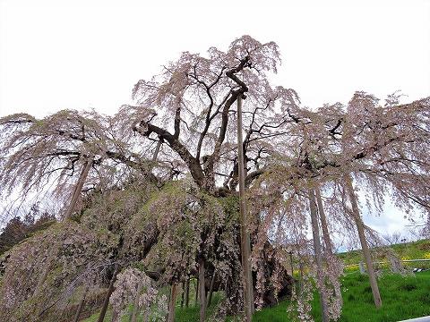 17-04-27 三春03