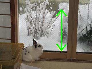 雪うさぎ。