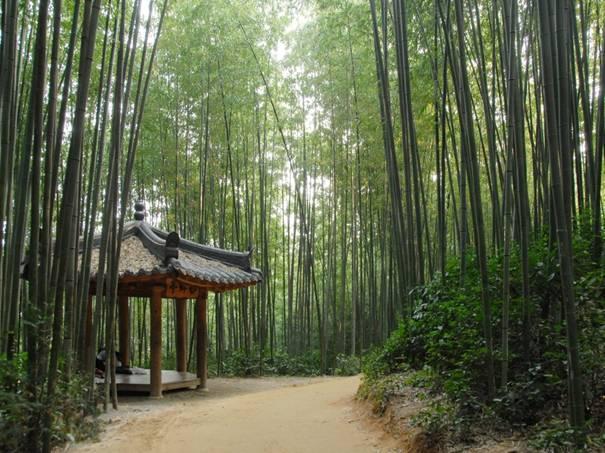韓国旅行、竹