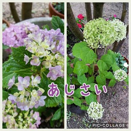 Collage 2017-06-07 17_49_57.jpg
