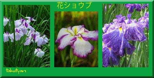 31花ショウブ.jpg