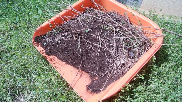 イワダレソウが自ら作った腐葉土