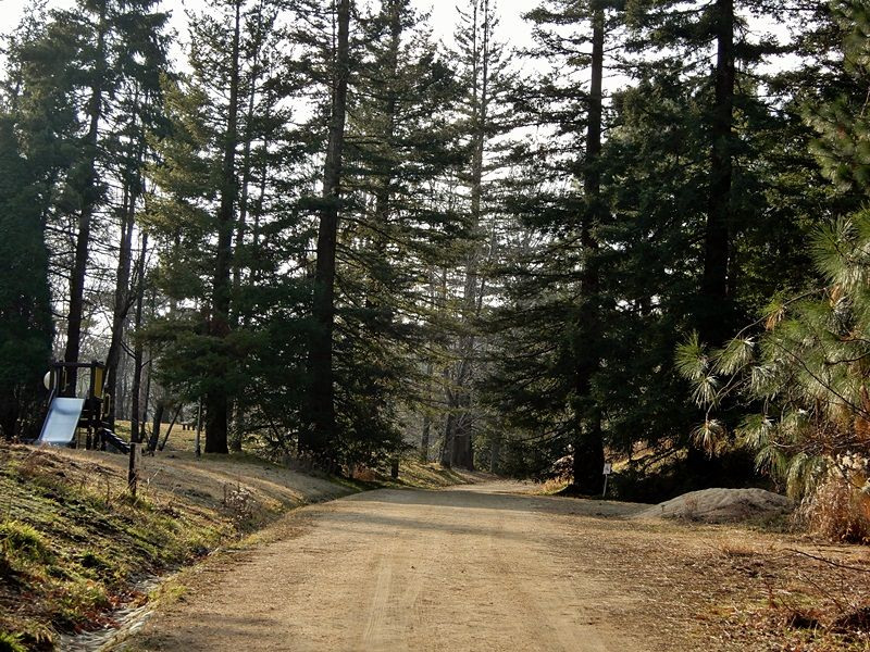 シアトルの森6