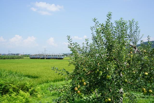 残暑の 弘南鉄道 大鰐線2