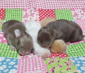 kitty131119-0-1-350.jpg