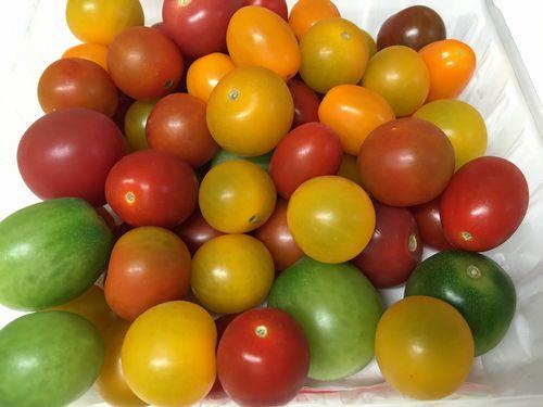 トマト004.jpg