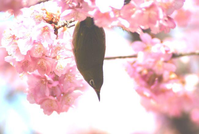たんとの四季折々写真俳句   <第3版>