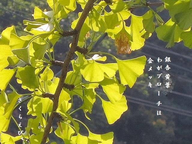 IMG_2849kouyouablog45.jpg