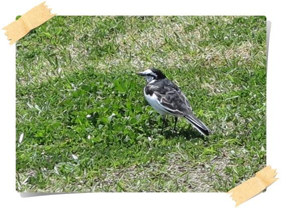 鳥さん-233.jpg