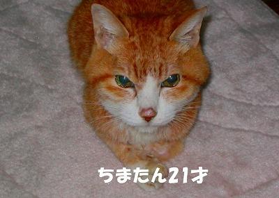 ちまたん21才.jpg