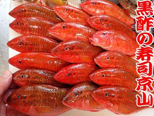 オキナヒメジ 寿司 出前 未利用魚