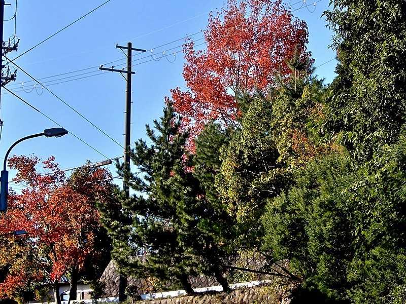 公園の紅葉4