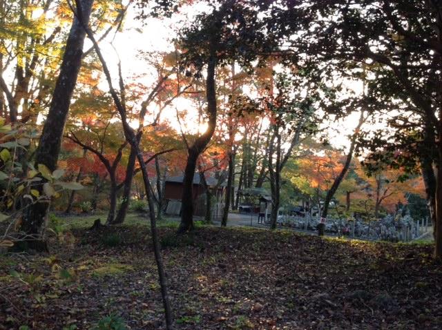 紅葉と夕陽の根来寺