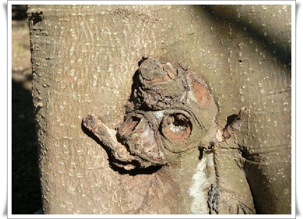 恐竜の木1
