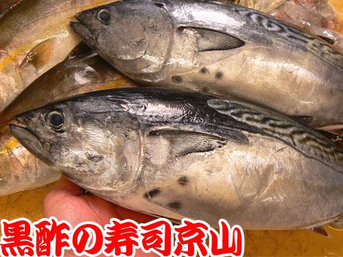 江戸川区 寿司 出前 松江.jpg