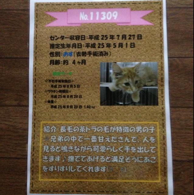 rblog-20130919010231-00.jpg