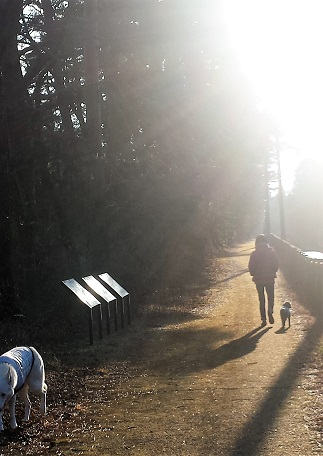 17-01-03 公園散歩2