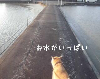 0608夕田んぼ2.jpg