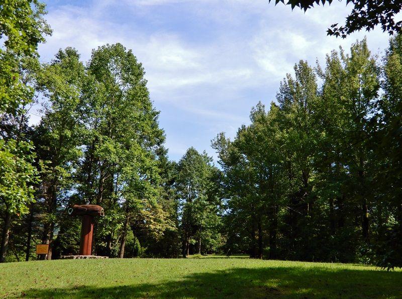 シアトルの森2